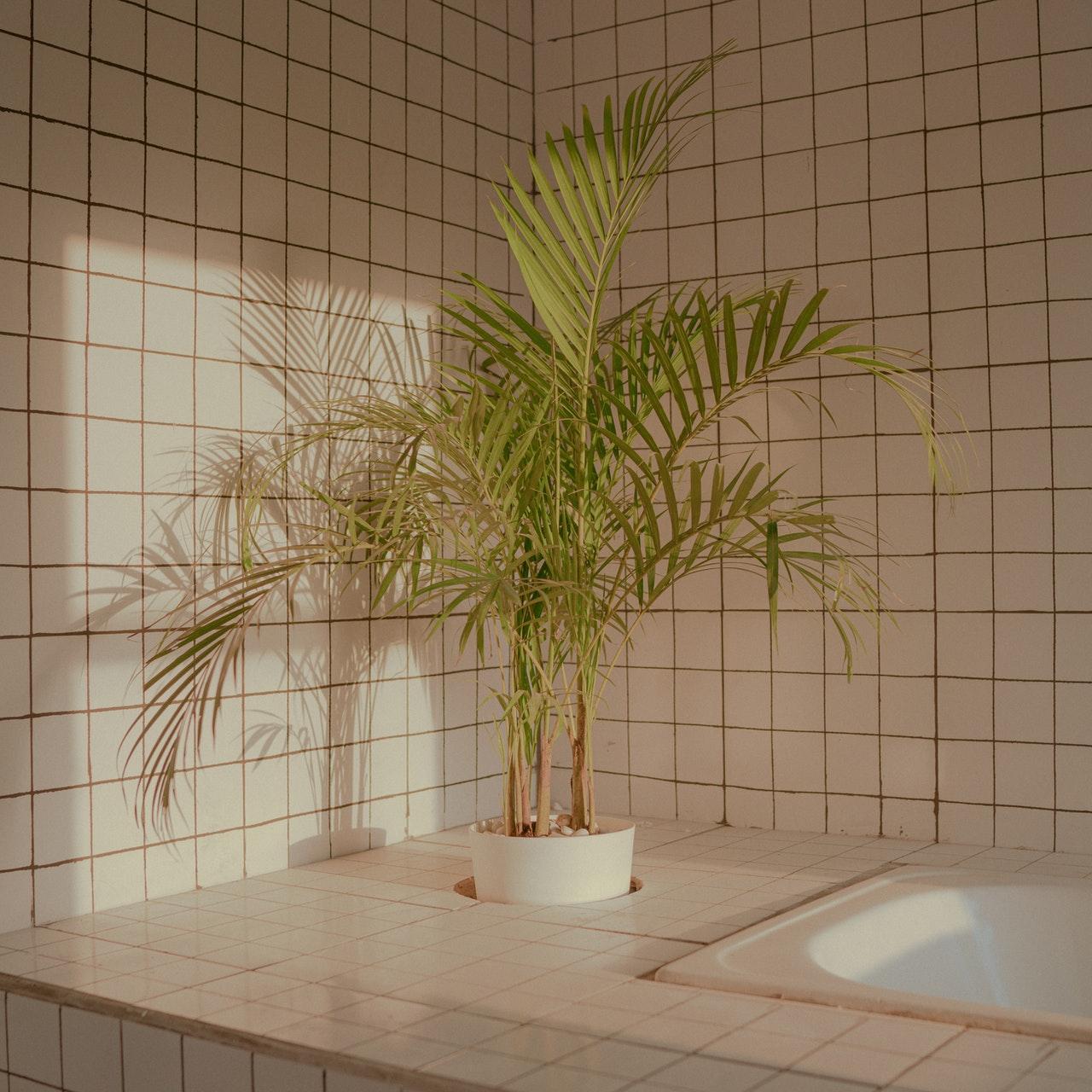 las cualidades anti moho las hacen perfectas para habitaciones humedas como baños o cocinas