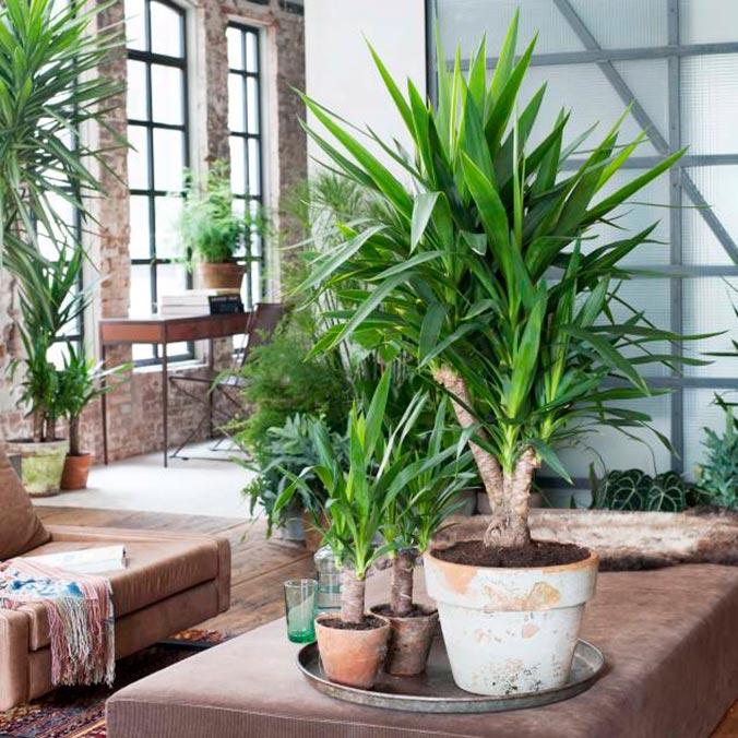 Plantas en casa para evitar ruidos