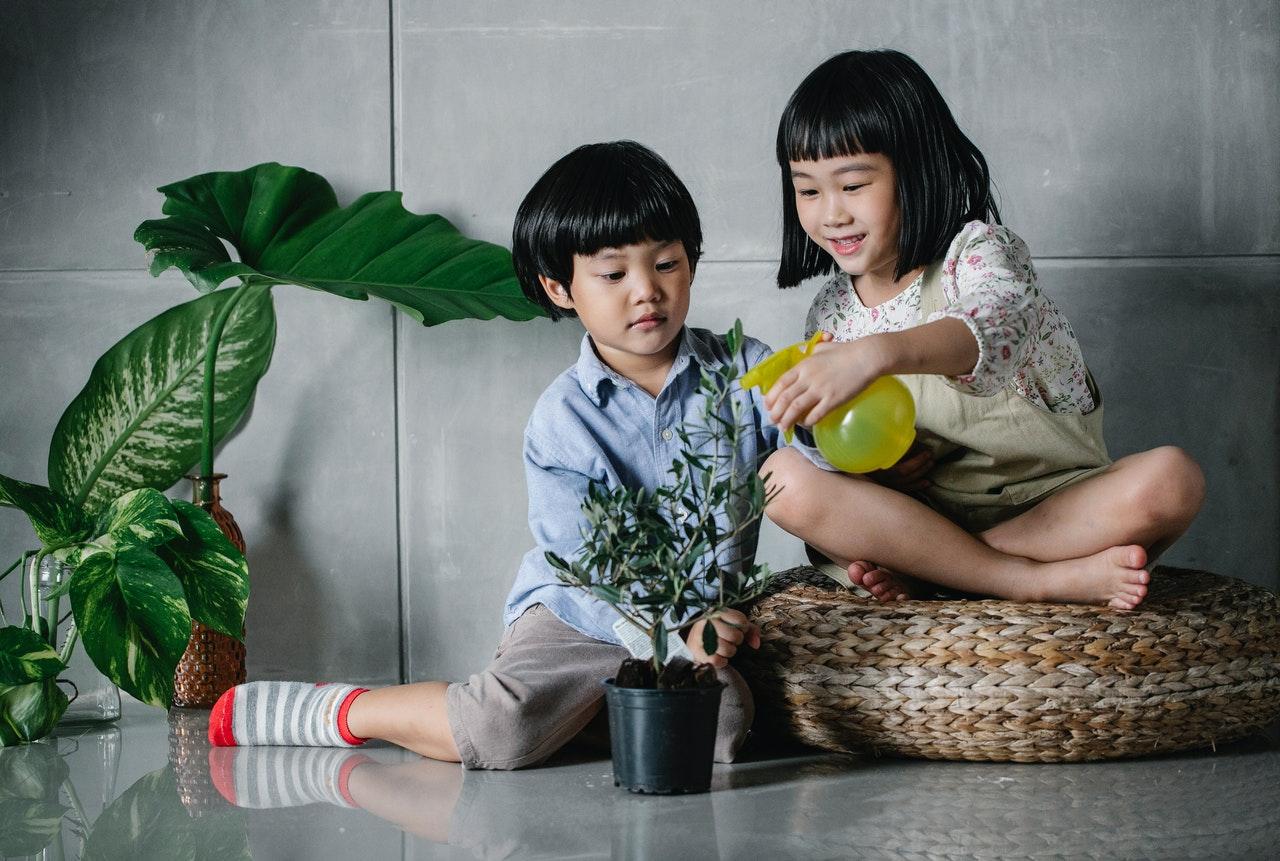 las plantas pueden ayudar a los niños a aprender responsabilidades