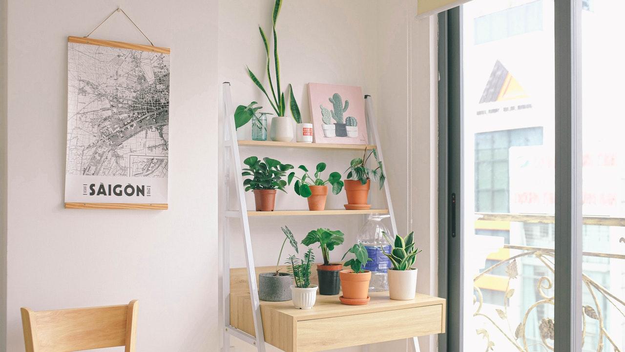 algunas plantas tienen olores que ayudan a crear un ambientador natural