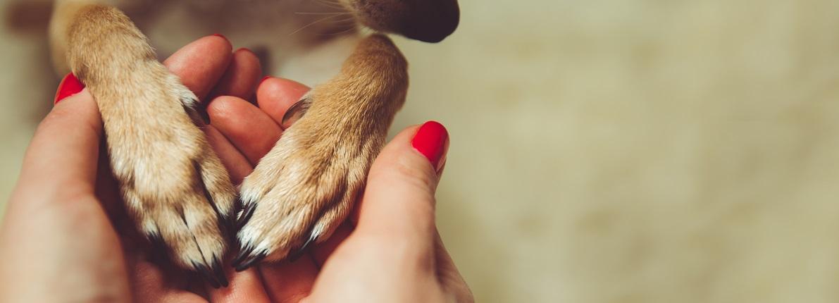 Solo el 5% de los pisos de alquiler aceptan mascotas, según datos de Fotocasa