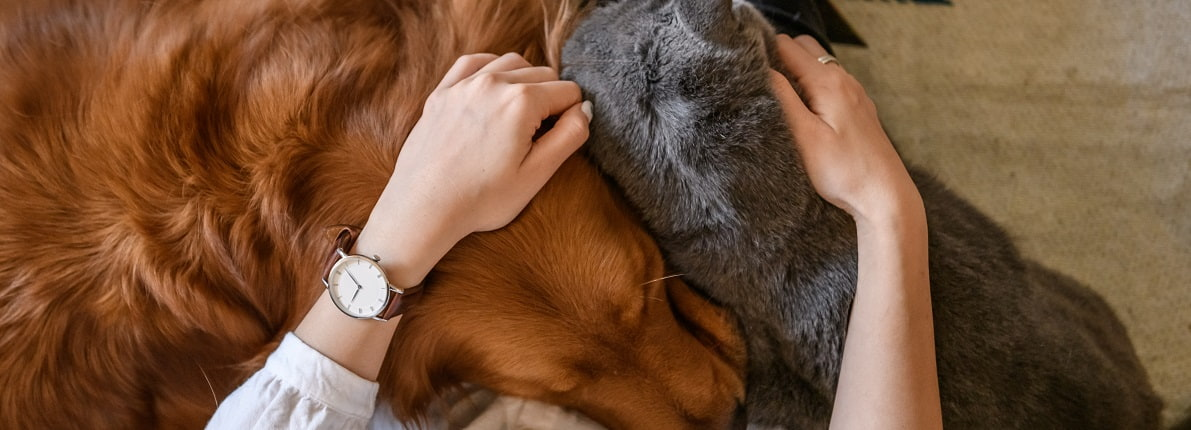 Cómo preparar la casa para la llegada de una mascota
