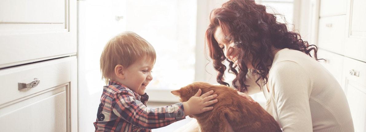 ¿Nos pueden prohibir tener una mascota en un piso de alquiler?