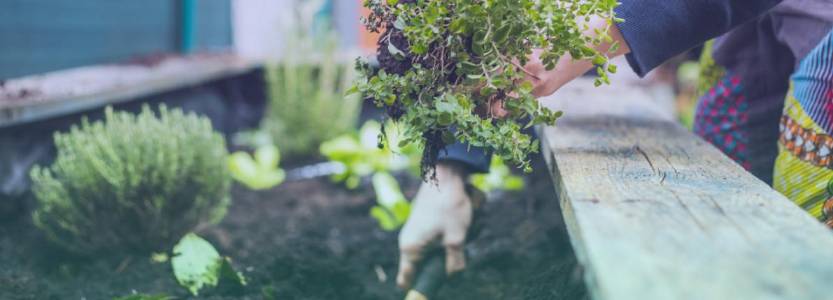Decora tu terraza o jardín: ¿qué plantar en verano?