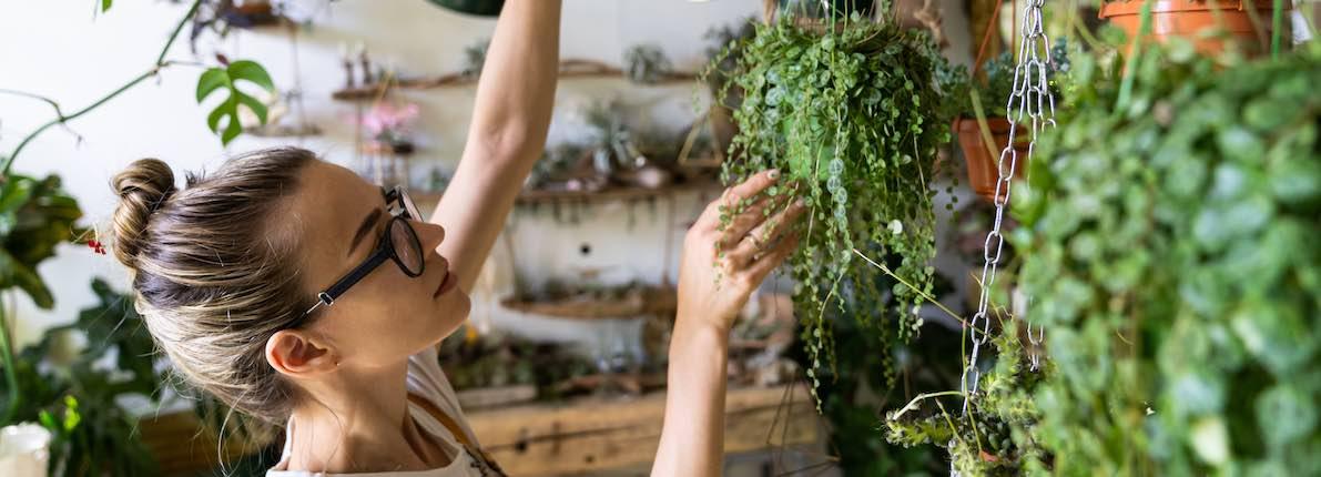 5 plantas purificadoras del aire de nuestra casa