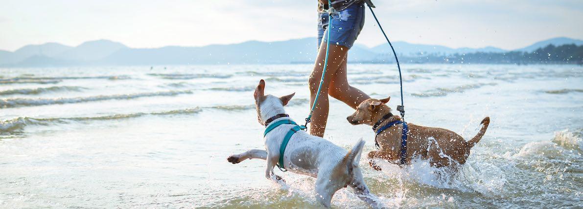 Playas en las que aceptan perros en España