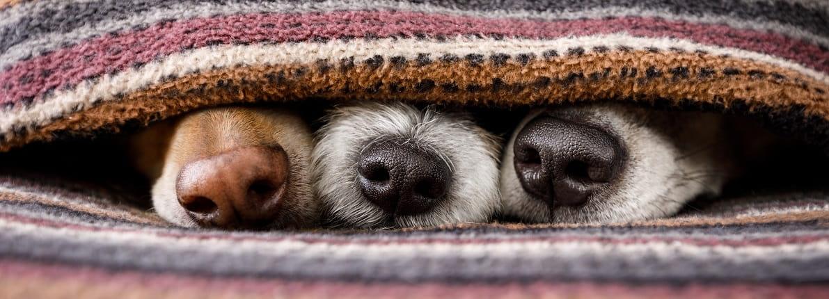 Nueva Ley de Protección Animal: conoce los derechos de tu mascota